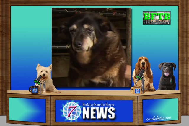 BFTB NETWoof News with the world's oldest dog on back screen