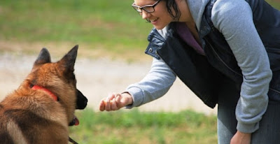 How to Train Canine Dogs Without the Help of Professional Trainers
