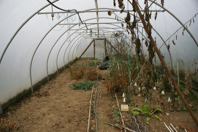 Polytunnel in winter - about to become a duck pen