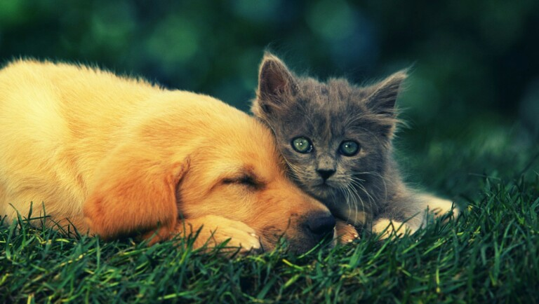 Cão e gato bebés