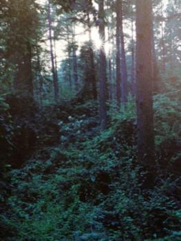 LOUIS VUITTON FOREST