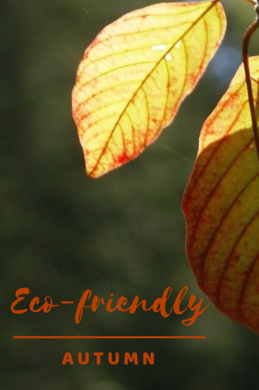 Easy steps to have an eco-friendly autumn