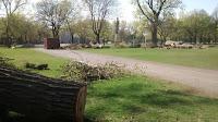 herbe au parc