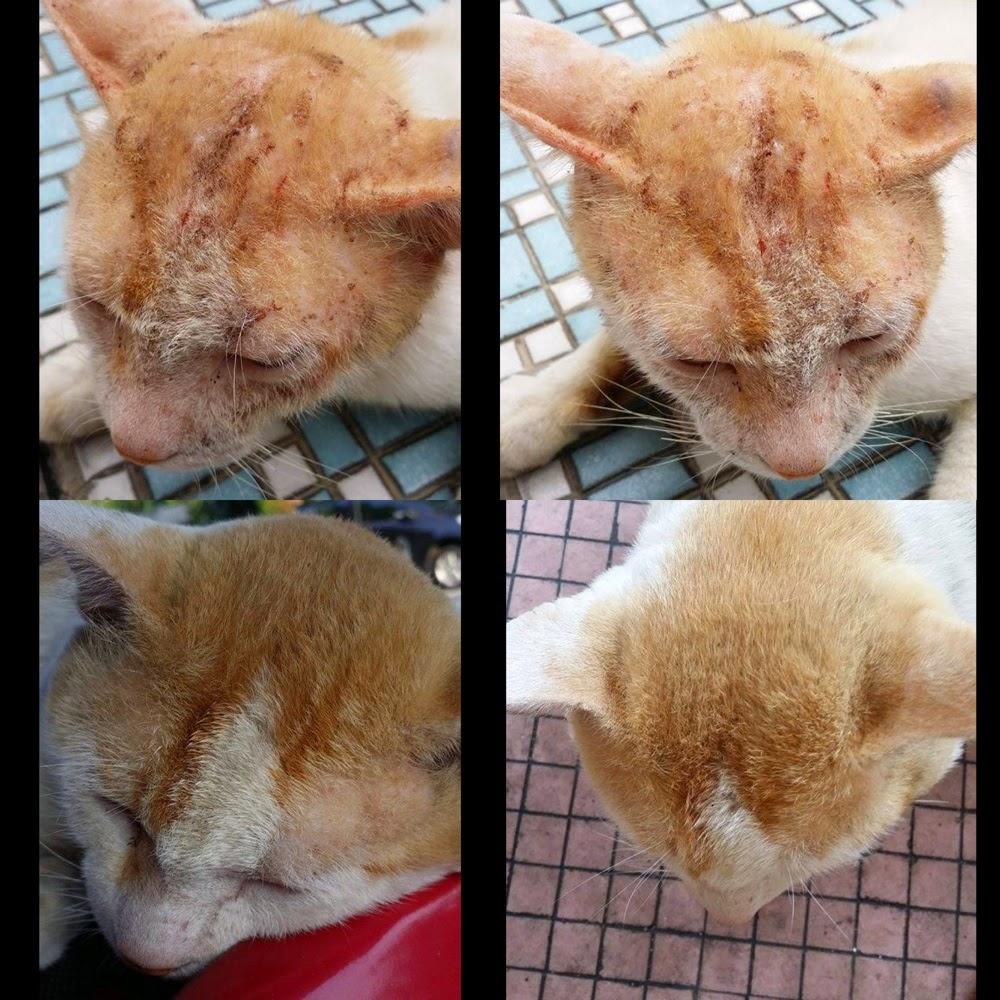 5 Produk Wajib Untuk Kucing Kesayangan Anda Papameow