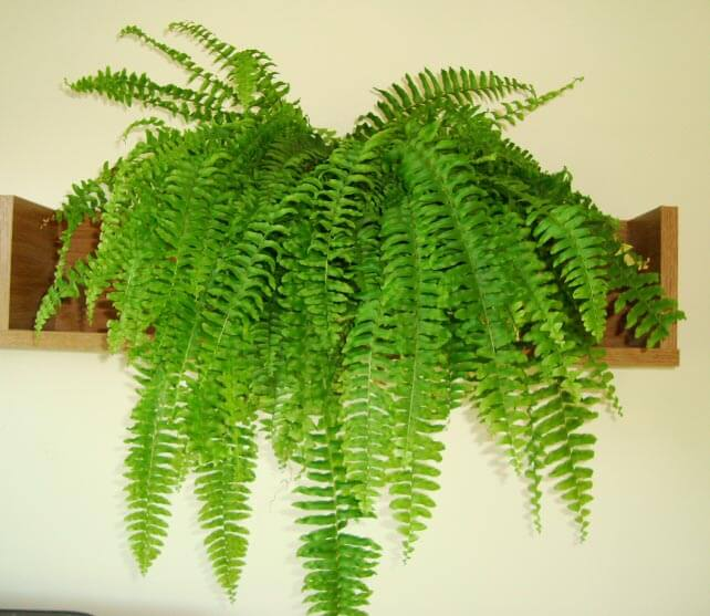 TERRACE GARDENING How to grow different types of house plants