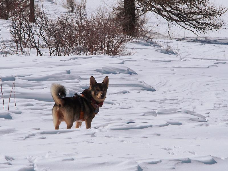 Week end à la neige avec un chien 9