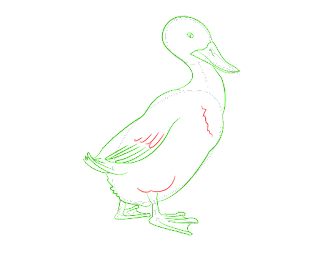 HOW-TO-DRAW-A-DUCK