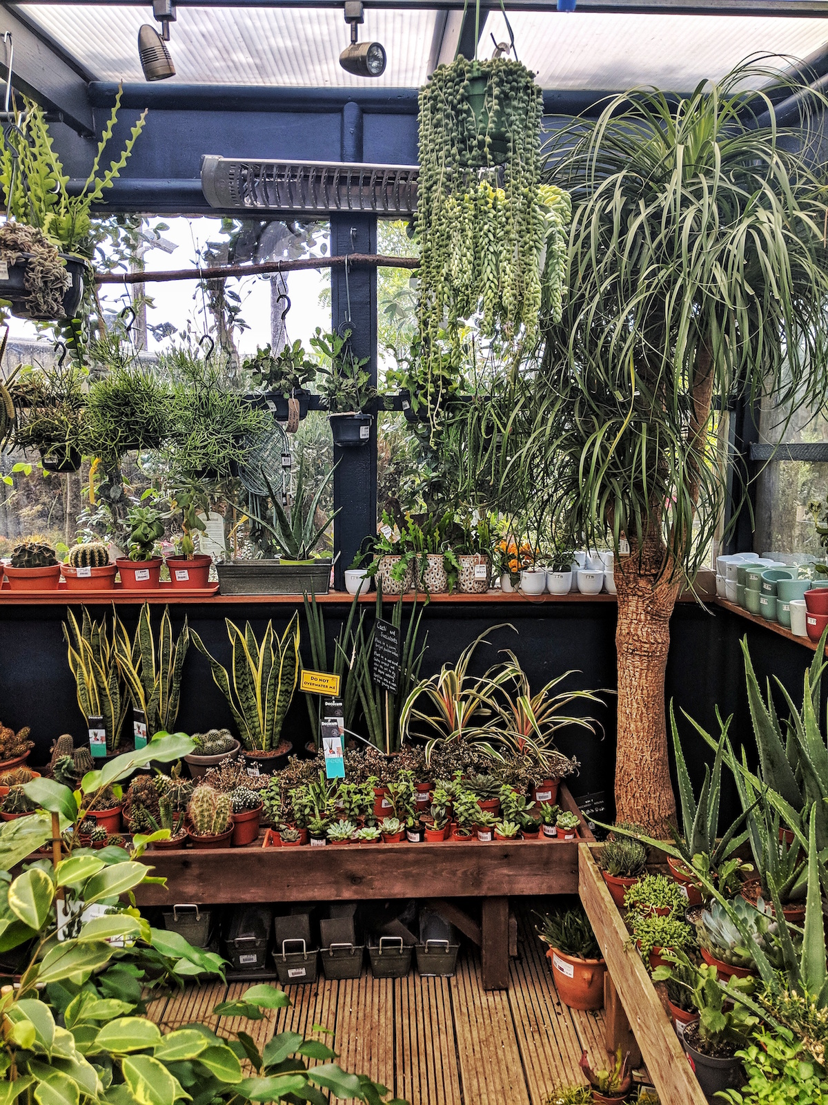Houseplants in Boma Garden centre