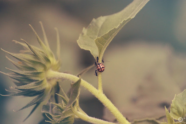 The Gathering, shashank mittal photography, shashank mittal, photography, bug pic, bug image, macro photo,