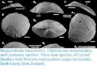 https://sciencythoughts.blogspot.com/2018/05/meganodontia-haunuiensis-elliptiolucina.html