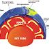 LITOSFER (1) : Lapisan Kerak Bumi & Pembentukan Batuan