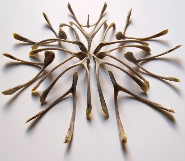 Jamie Newton wishbone sculpture