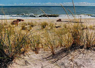 horizontes-pintados-playas