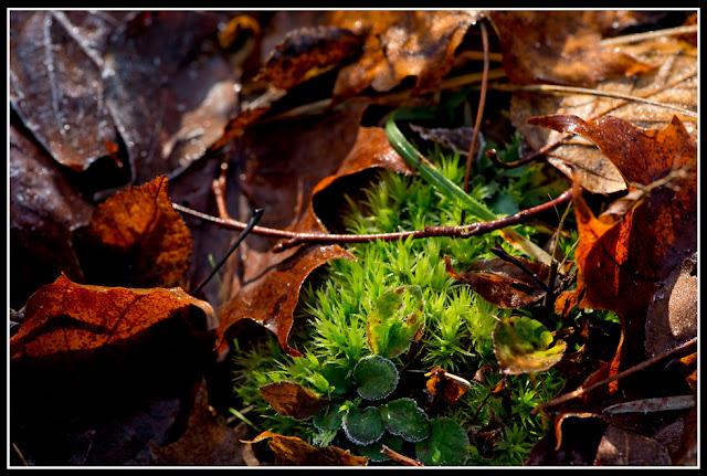 Nova Scotia; Nature; Autumn; Leaves, Frost