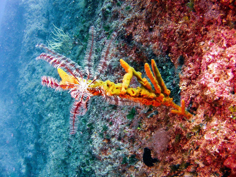 Wyspa Pag pod wodą