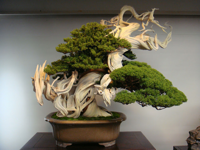 A magnifica arte do Bonsai