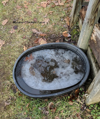 Water tub melting in sun for chickens