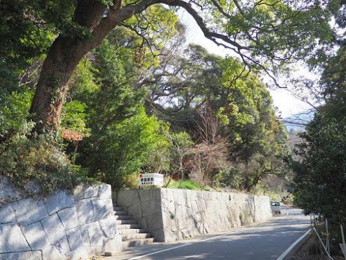 薬王院は椎の木で有名