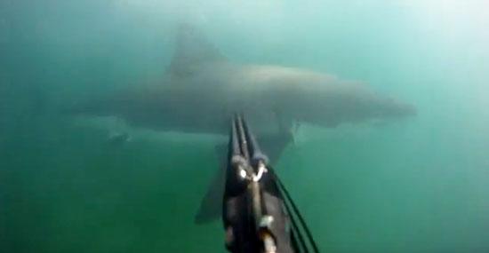 Ataque de tubarão branco - mergulhador grava tudo com sua GoPro