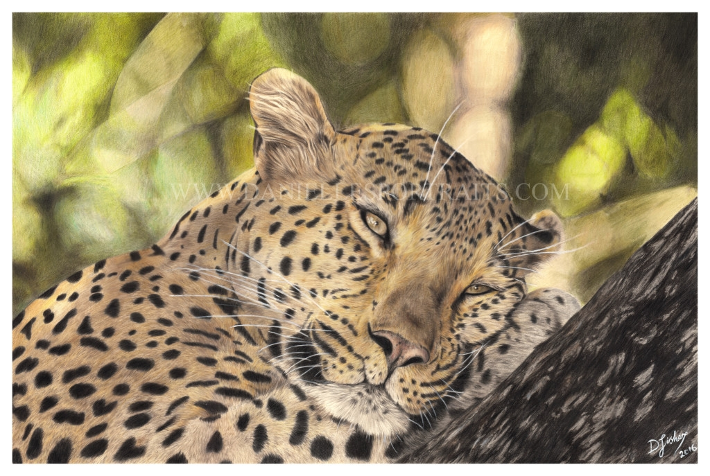 12-Leopard-Danielle-Fisher-Realistic-Pet-and-Wildlife-Portraits-www-designstack-co