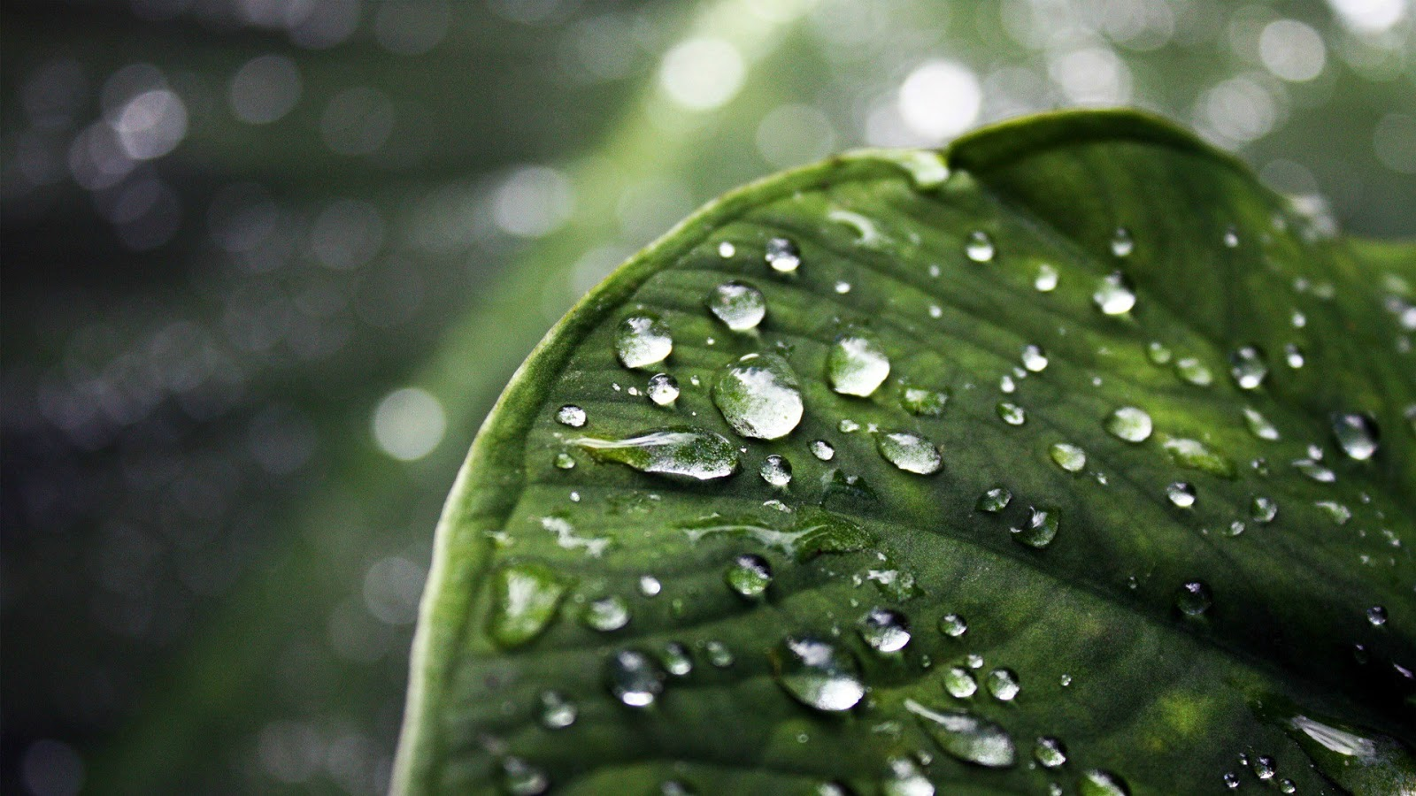 Monsoon Nature Wallpapers