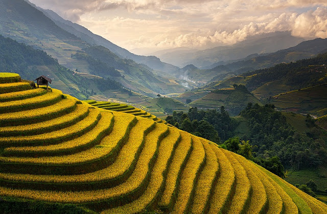 4 Must Try Things When Traveling to Mu Cang Chai terraced fields1
