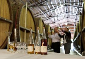Elabora tu propio brandy en Bodegas Torres