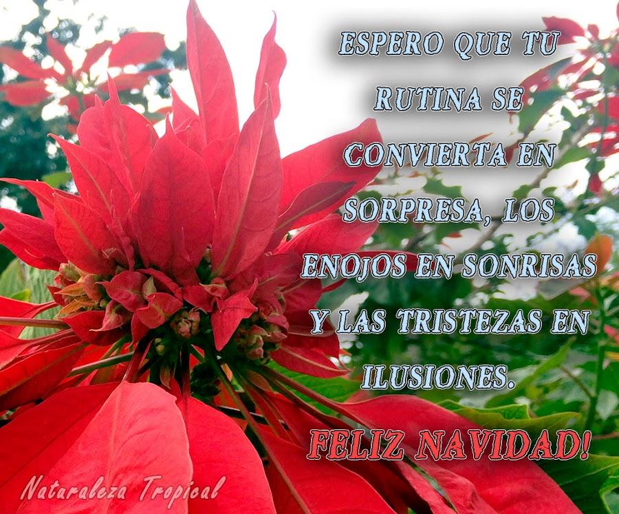 Espero que tu rutina se convierta en sorpresa, los enojos en sonrisas y las tristezas en ilusiones. ¡Feliz Navidad!