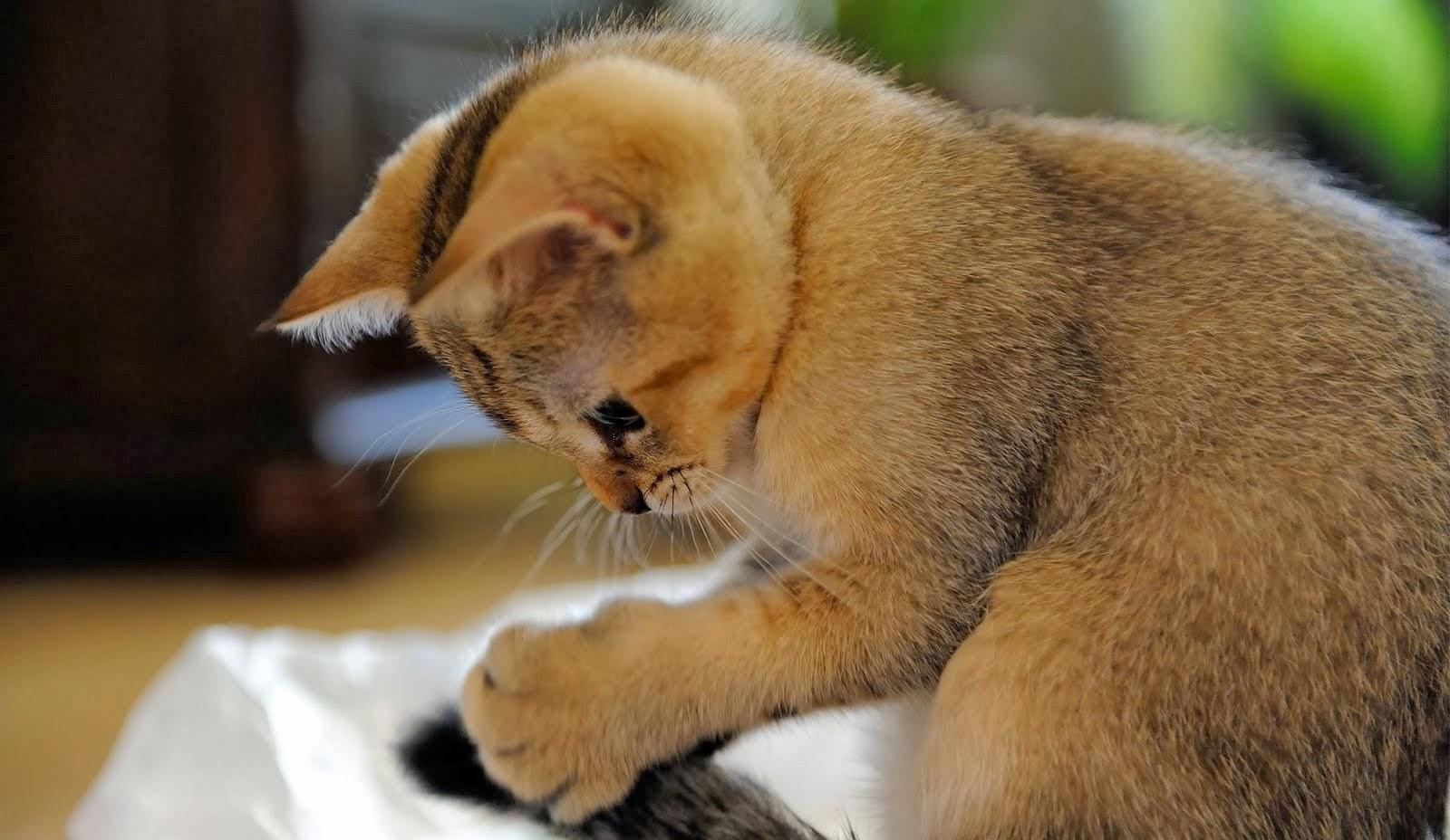 18 Wallpaper Kucing Lucu Terbaru Bangiz