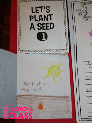 This plant lifecycle lapbook provides students with a fun way to record their learning about plant growth. Hands on and engaging learning for Kindergarten-Second Grade. #plants #plantunit #lapbook #lapbooks #plantgrowth #lifecycles #kindergarten #1stgrade #2ndgrade #science