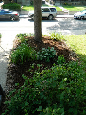 Little Italy Toronto Front Garden Cleanup after by Paul Jung Gardening Services