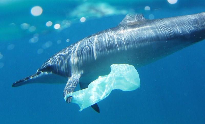 Golfinho com saco de plástico