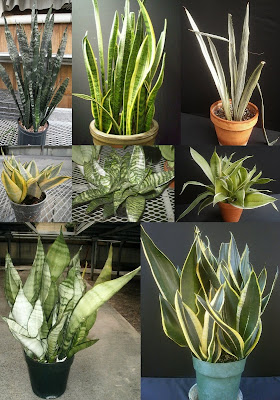 Plants are the Strangest People: 10/9/11 - 10/16/11
