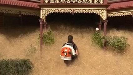 Hairy Panic Rumput Liar Dan Ganas Serang Rumah Warga Australia