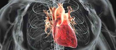 Foto Jantung Dibungkus Selaput Tipis Yang Disebut