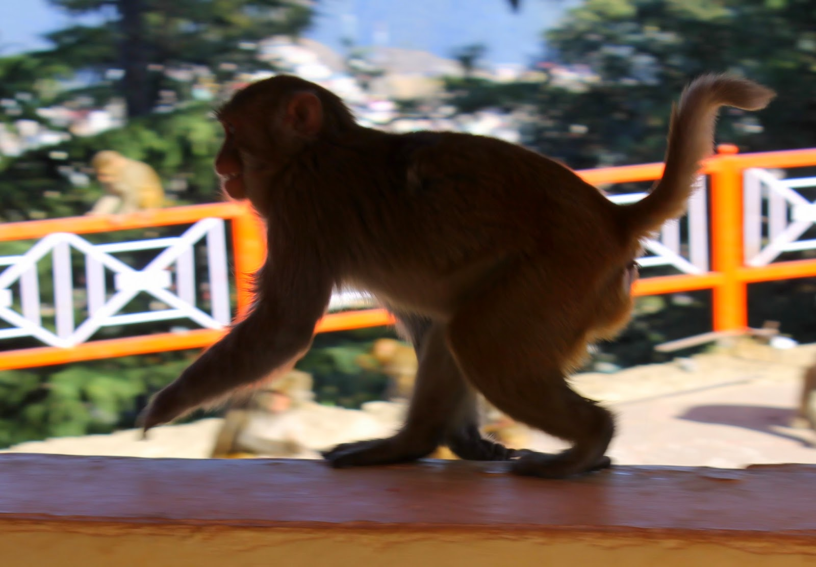 233ee62896 The Monkeys of Shimla | Passages From India