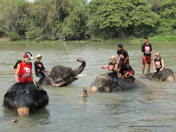 elephants in river at ElephantStay village in Ayutthaya, Thailand
