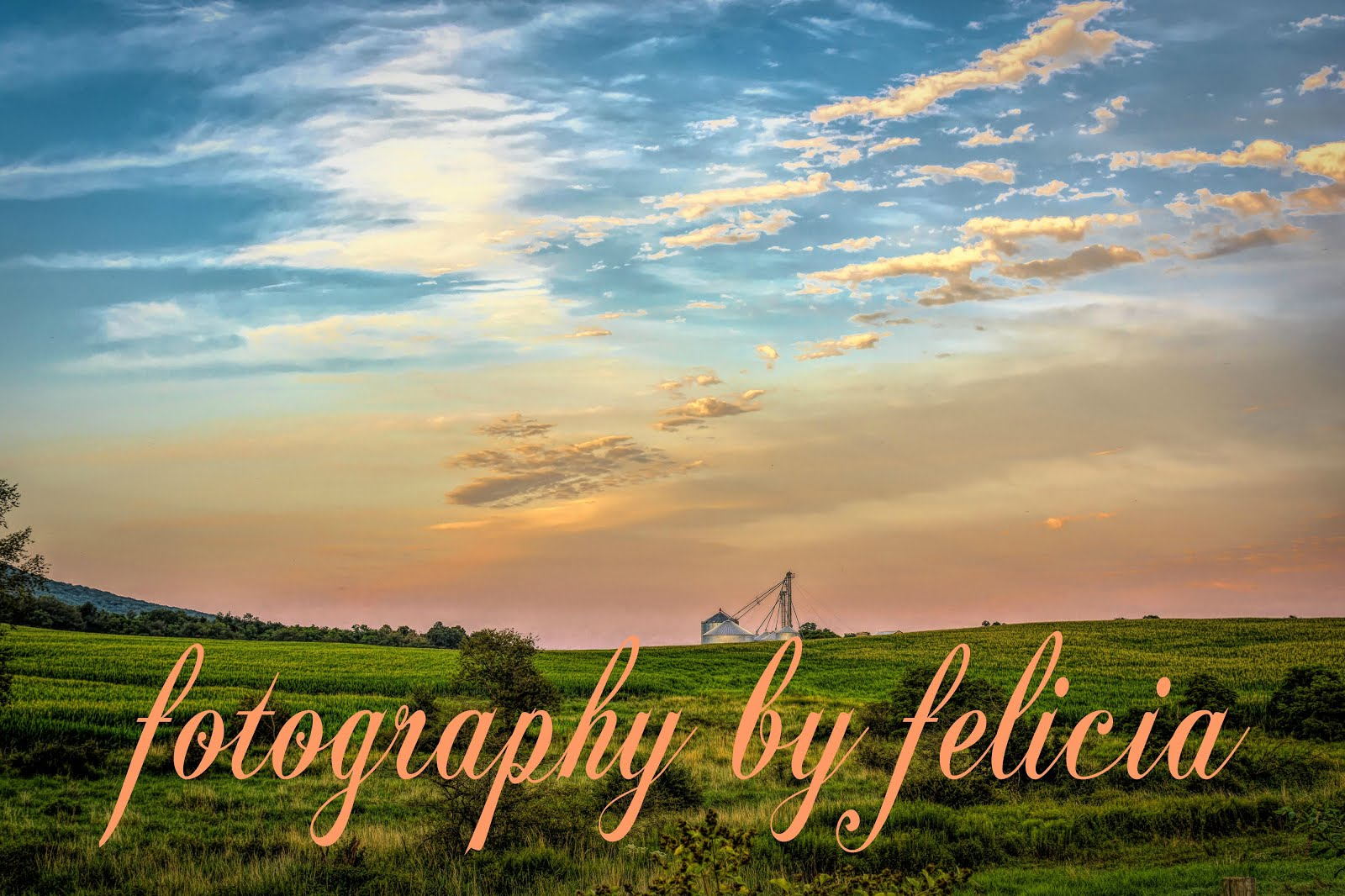 fotography by felicia