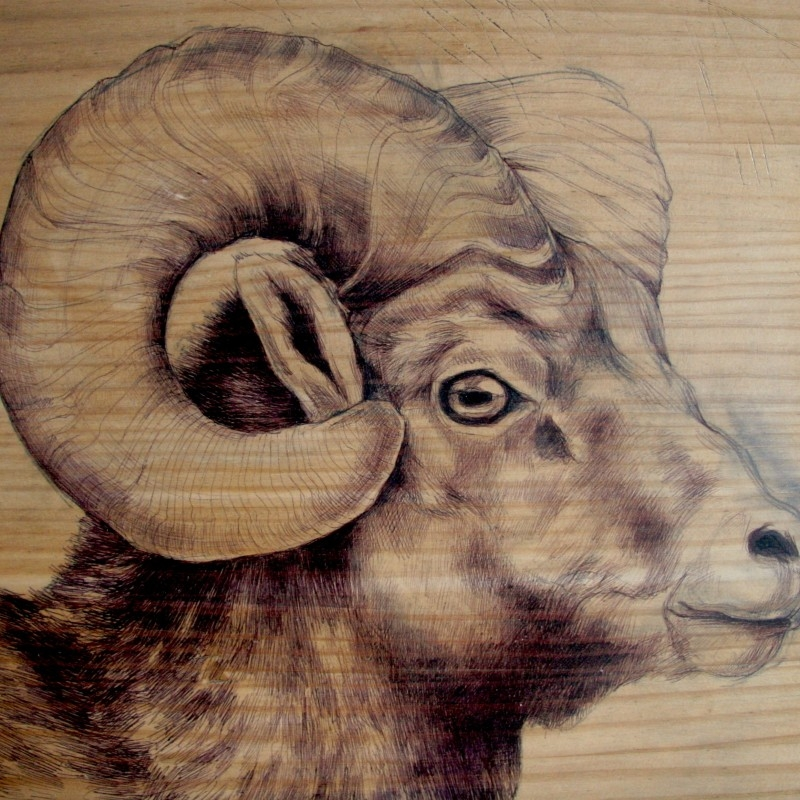 11-Ram-00-Martina-Billi-Recycled-Wooden-Planks-Used-to-Draw-Animals-www-designstack-co