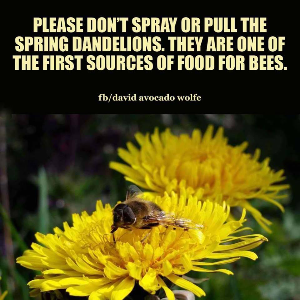 Piermont Community Garden Spring Dandelions Bees