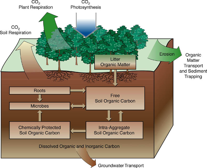 Role of forest in prevention of soil erosion