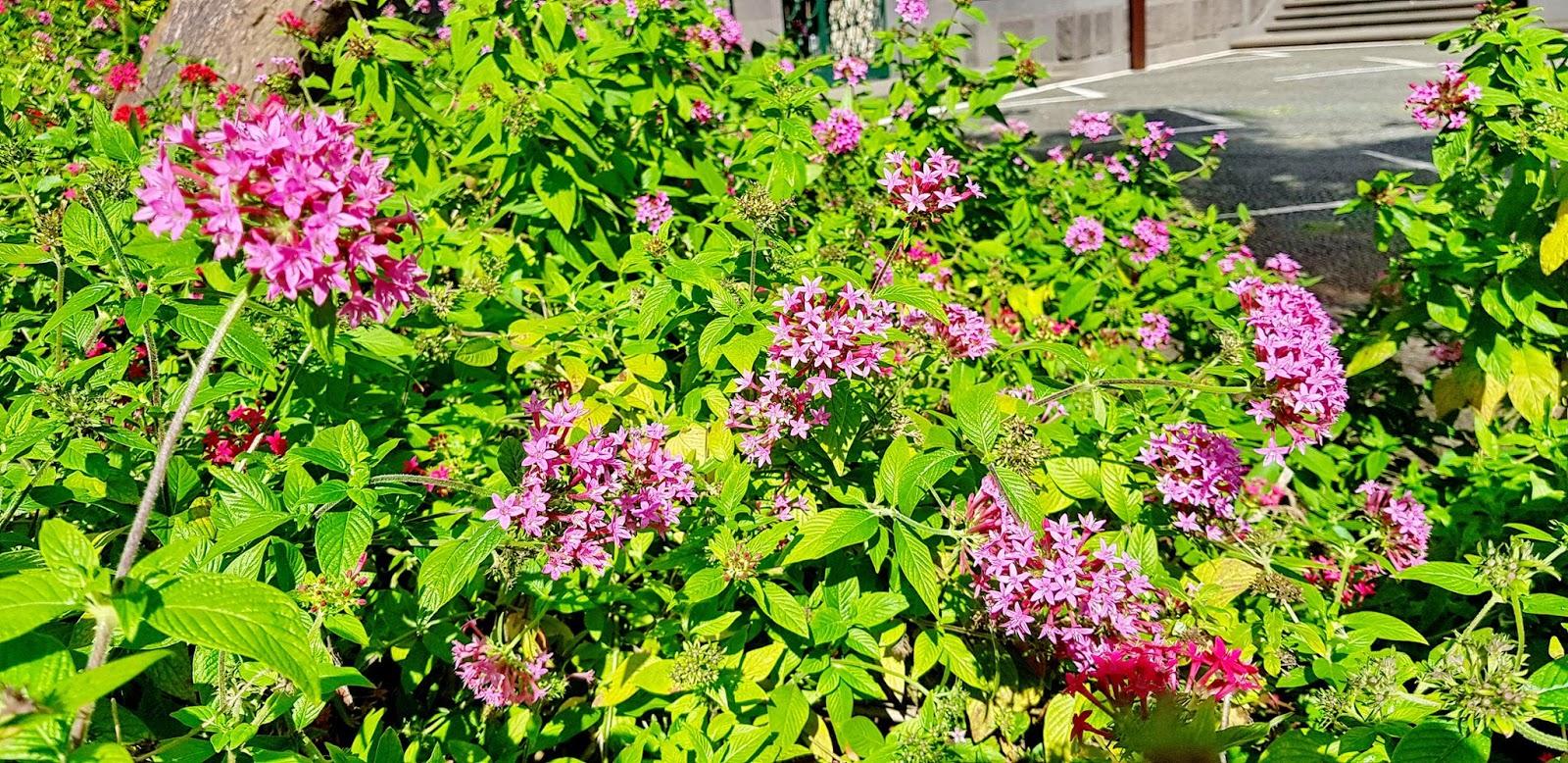 flores simples que encantam