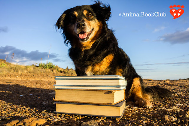 A happy mixed-breed dog sits on a beach with a pile of books