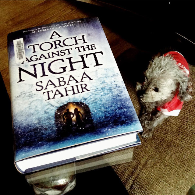 A tiny grey poodle, Murchie, lies on a brown cushion. He wears a pink hoodie. Above him, on a glass table, is a hardcover copy of A Torch Against the Night. Its cover depicts two people running through a small tunnel in a massive stone wall.