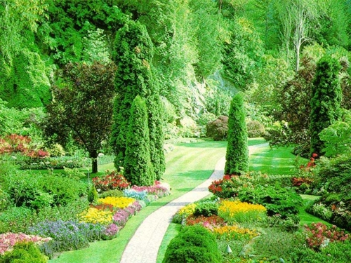 Tips Menjaga lingkungan agar terhindar dari penyakit