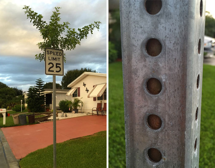 17 Pictures Of Trees That Prove The Miracle Of Life - I Found A Tree Growing Through Speed Limit Sign