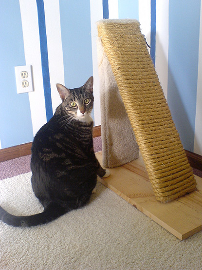 Tabby cat with homemade scratch post