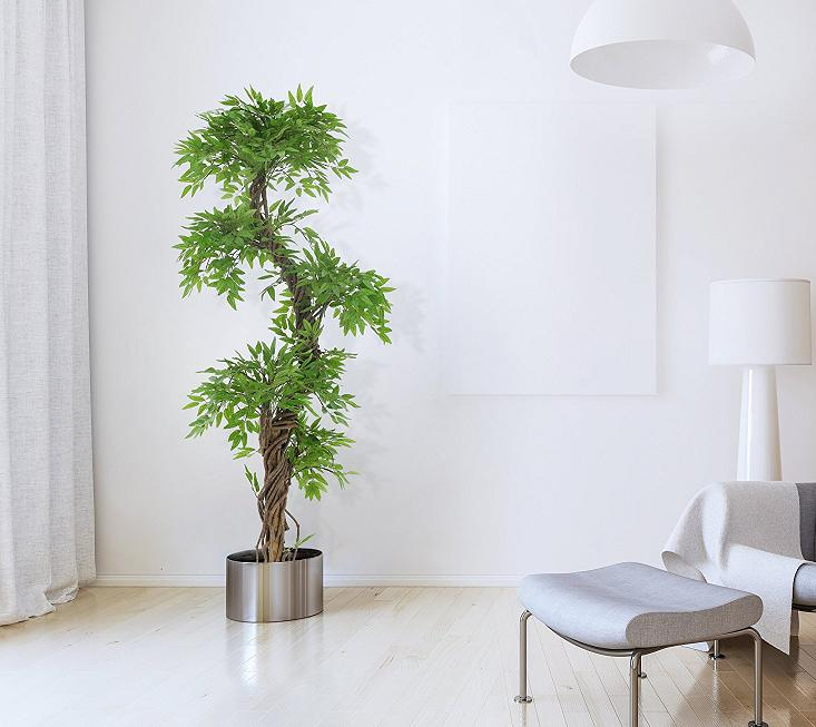 Marvelous Luxury Japanese Fruticosa Tree