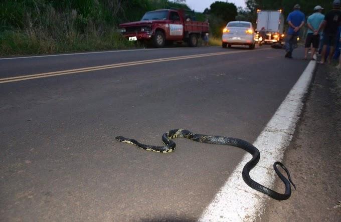ACIDENTE: Ao desviar de cobra, motociclista bate em caminhonete e morre