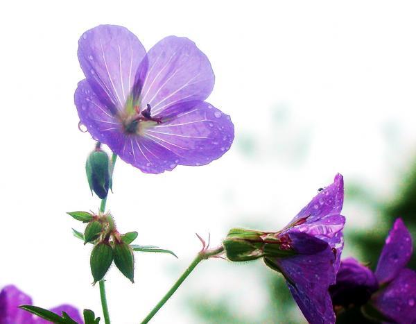 Flower Homes  Delicate Flowers